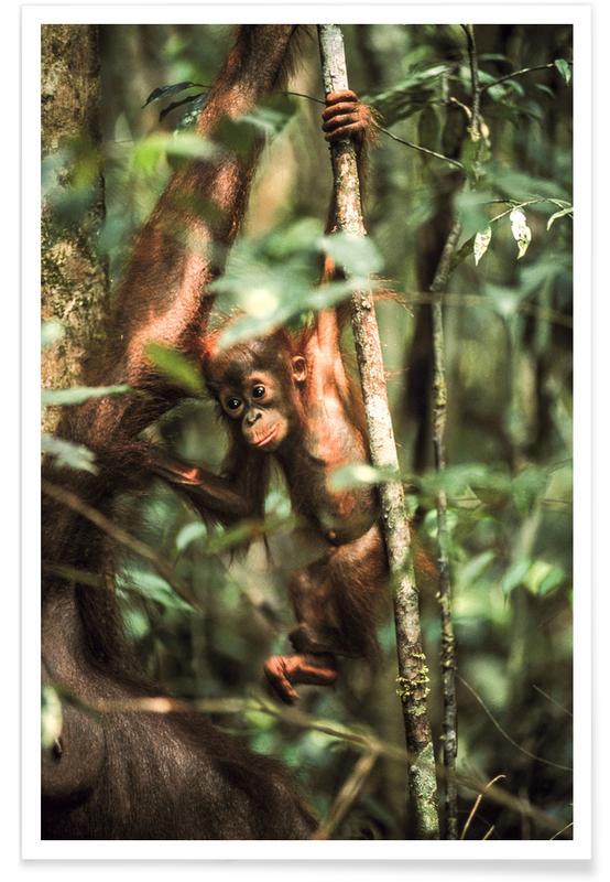 Monkeys, Monkey Business Poster