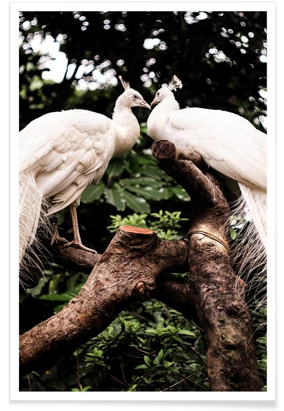 Påfugle, Peacocks Plakat