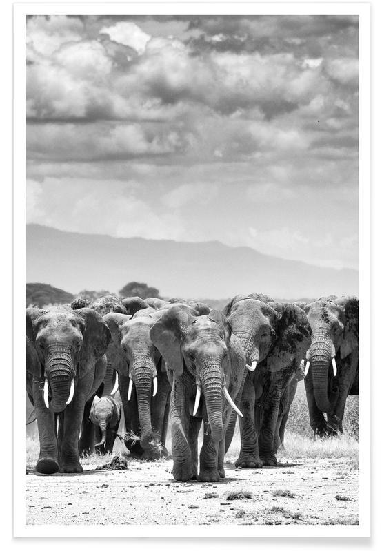 Noir & blanc, Animaux de safari, Troupeau d'éléphants affiche