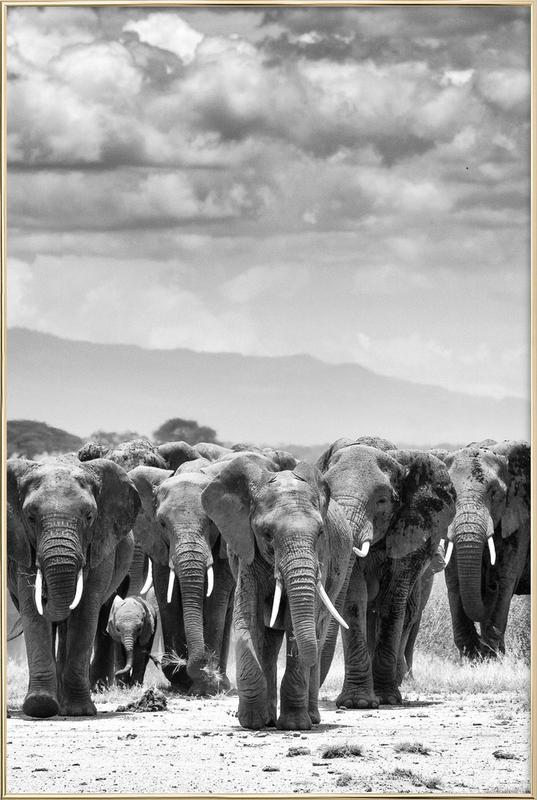 Herd Together affiche sous cadre en aluminium