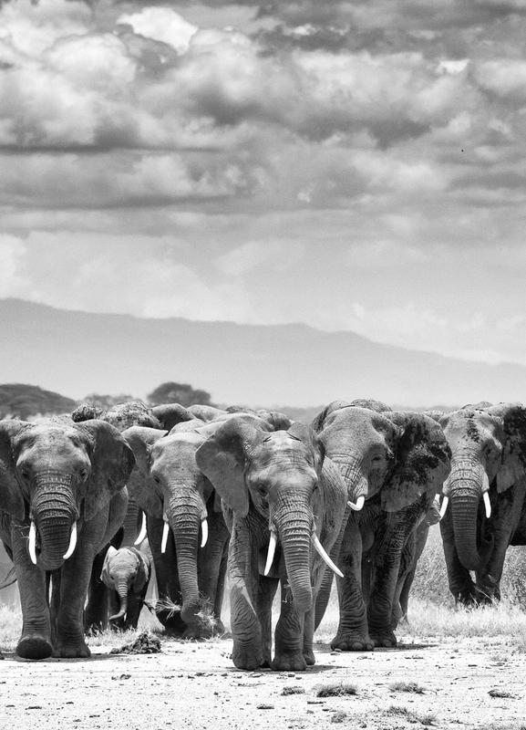 Herd Together Canvastavla