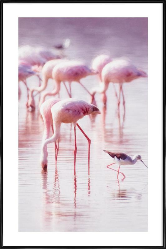 Flamingos in the Shallow Poster i standardram