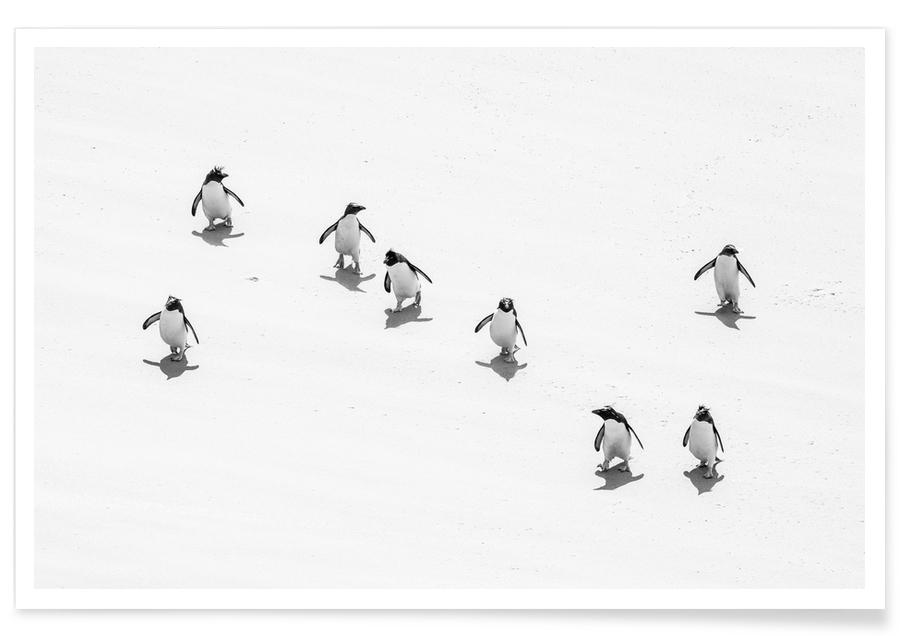 Noir & blanc, Pingouins, Snow Penguins affiche