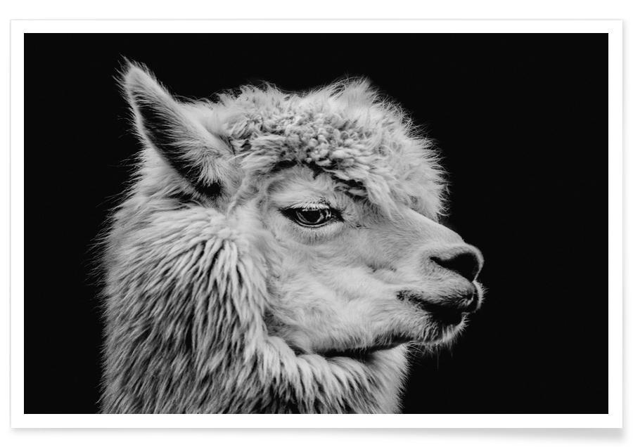 Sort & hvidt, Llama II Plakat