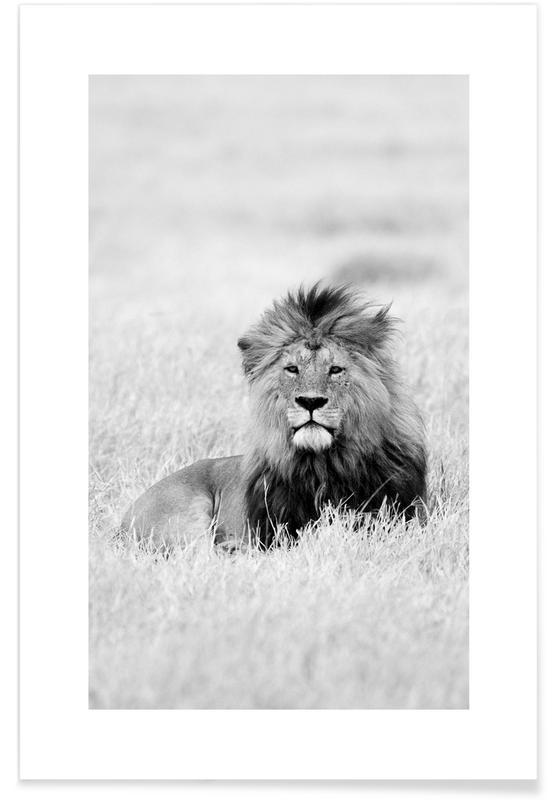 Safari dyr, On the Plains Plakat