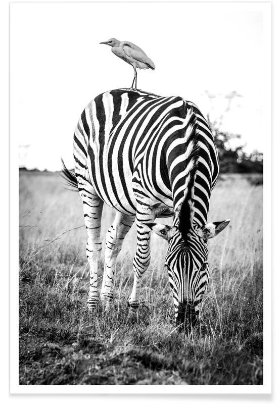 Noir & blanc, Animaux de safari, Zebra and Friend affiche