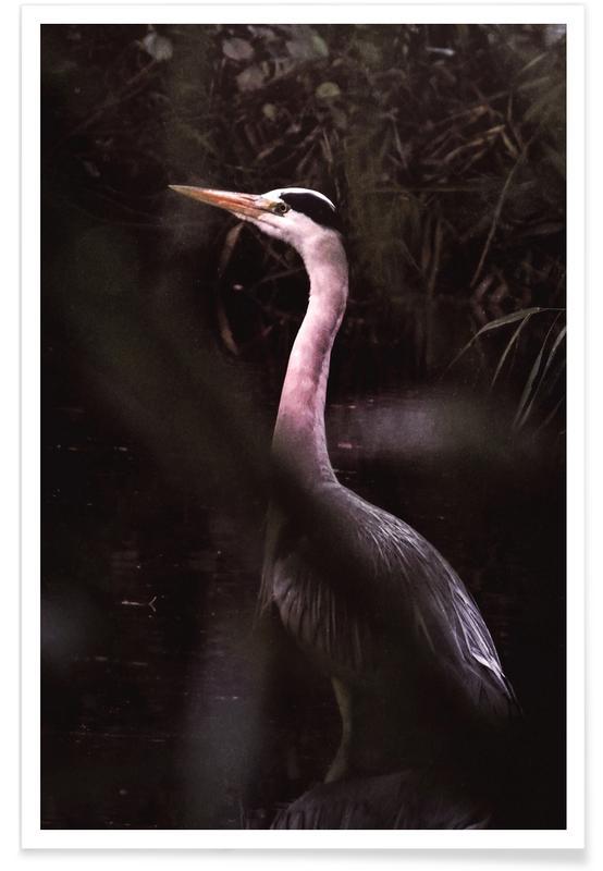 Cranes, Stork Poster