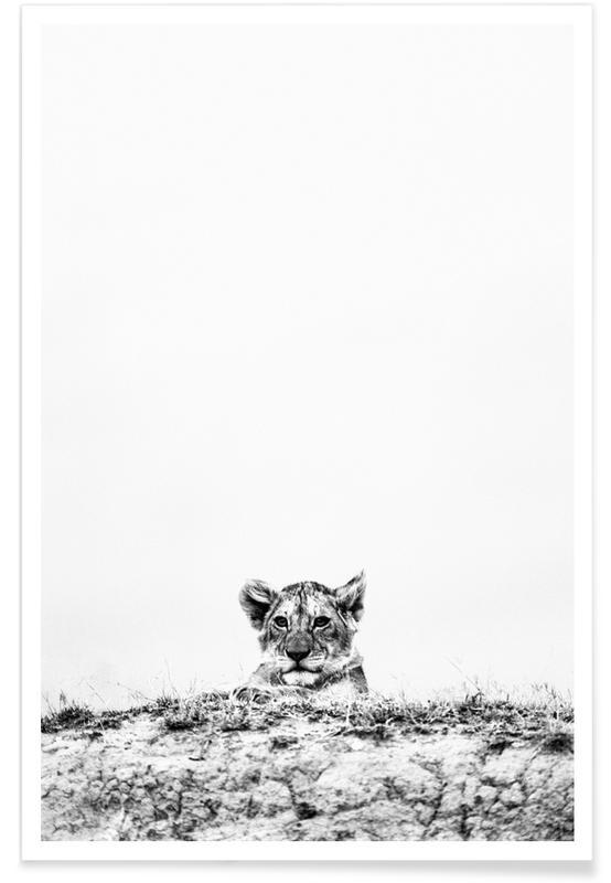 Sort & hvidt, Safari dyr, New Heights Plakat