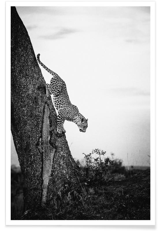 Léopards, Noir & blanc, Pouncing Leopard affiche