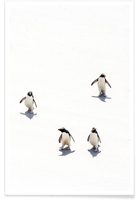 Pinguiner, Sort & hvidt, Snow Penguins II Plakat