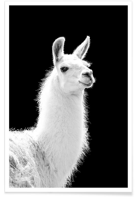Black & White, Llama Poster