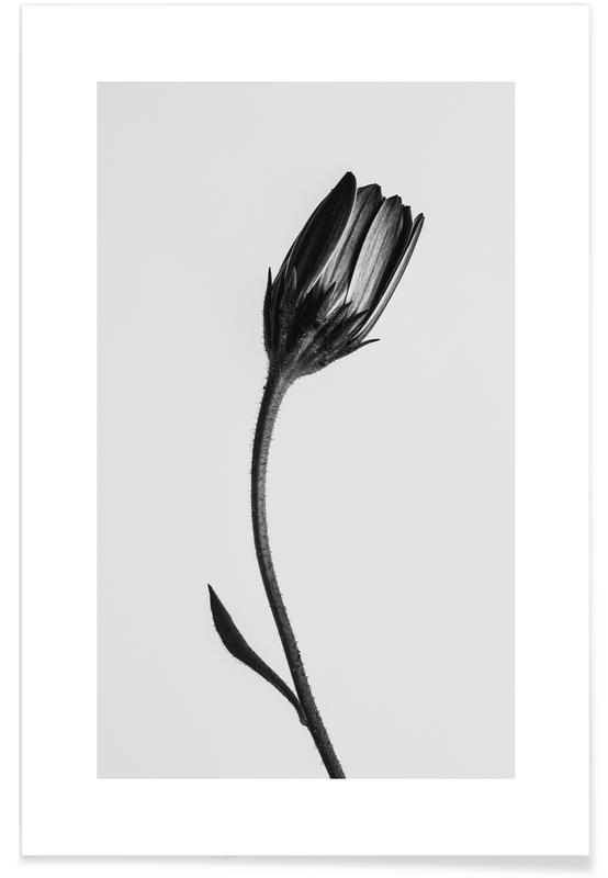 Blanco y negro, Strange Beauty I póster