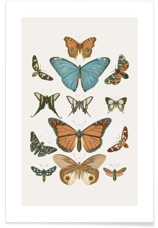 Sommerfugle, Sommerfugle Plakat