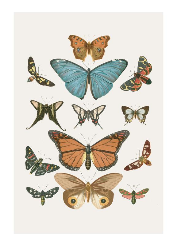 Butterflies Canvastavla