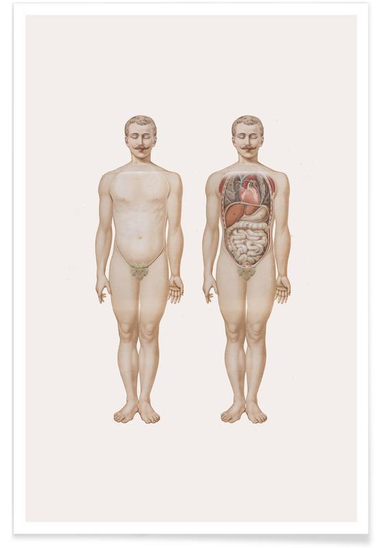 , Anatomy Plakat