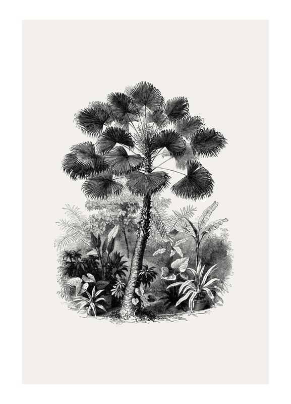 Fan Palm Canvastavla
