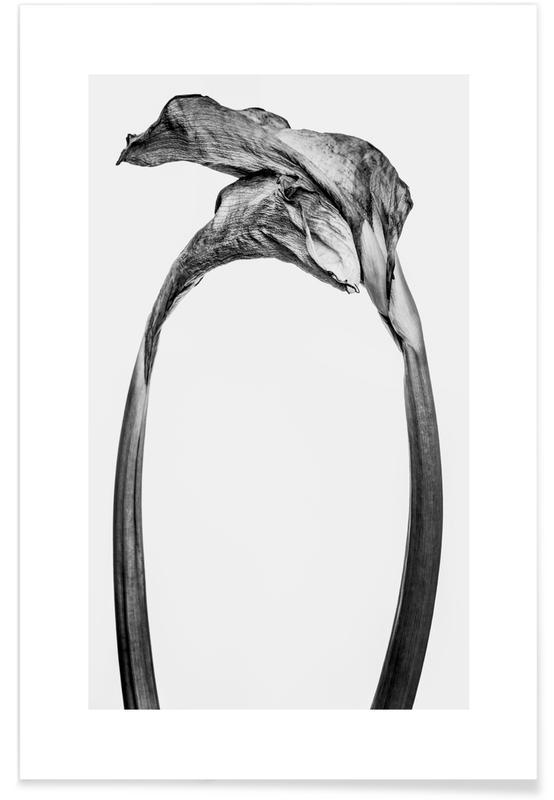 Liljer, Sort & hvidt, Strange Beauty IV Plakat