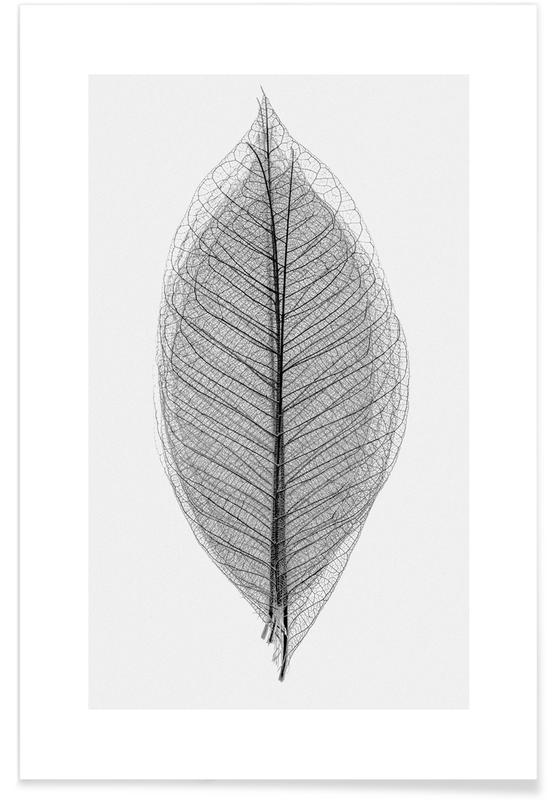 Blanco y negro, Skeleton of a Leaf póster