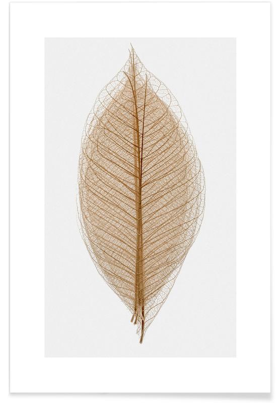Skeleton of a Leaf II Plakat