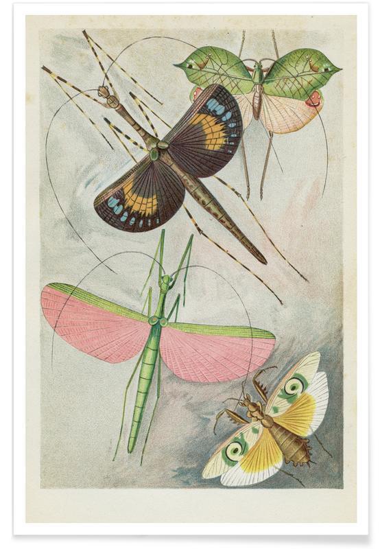 Insekter med vinger Plakat