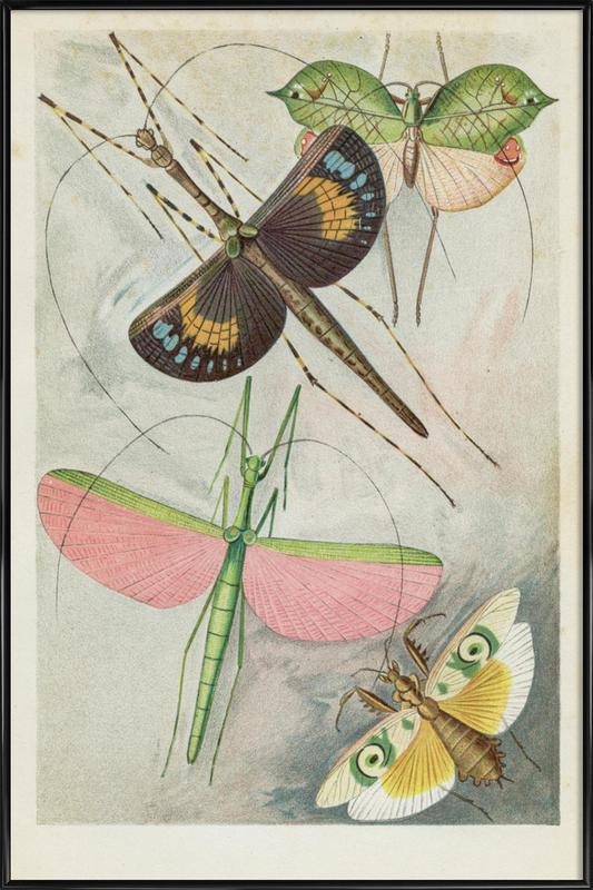 Winged Insects Poster i standardram