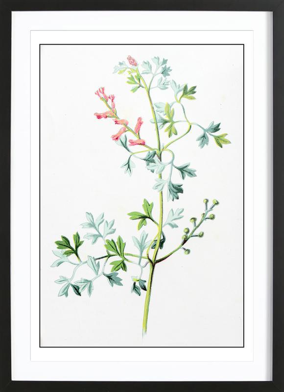 Antique Floral affiche sous cadre en bois