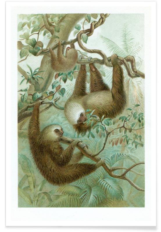 Paresseux, Sloths affiche