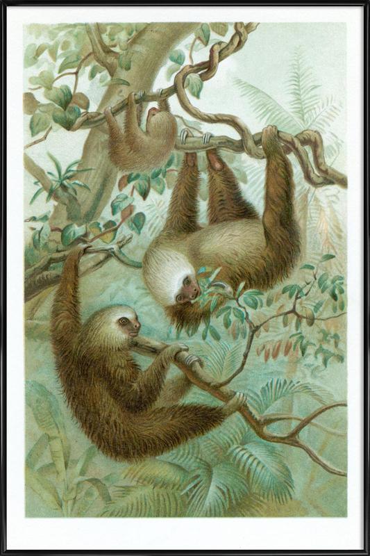 Sloths Poster i standardram
