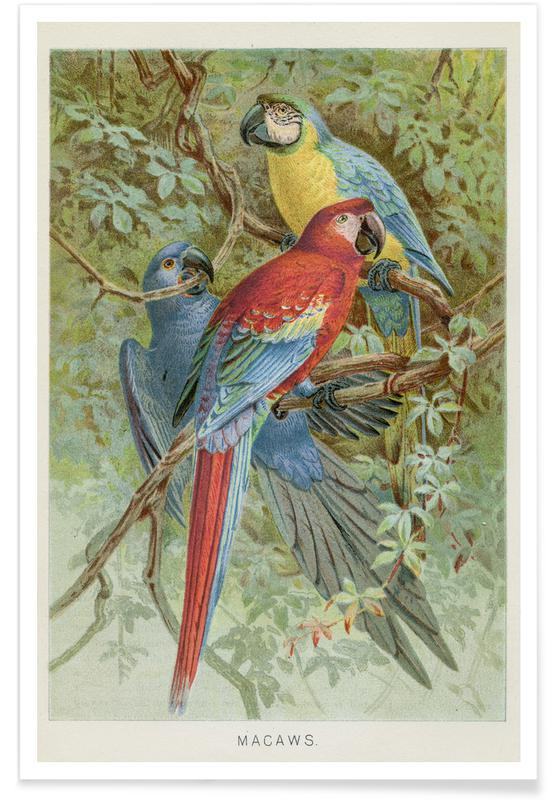 Perroquets, Macaws affiche
