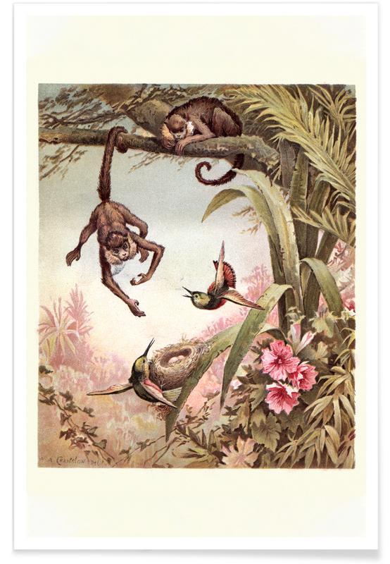 Monkeys affiche