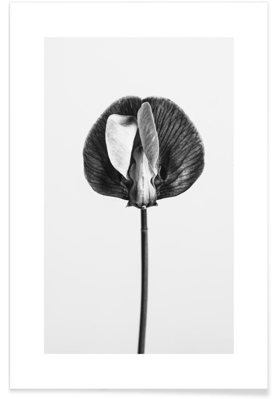 Bianco & nero, Strange Beauty V poster