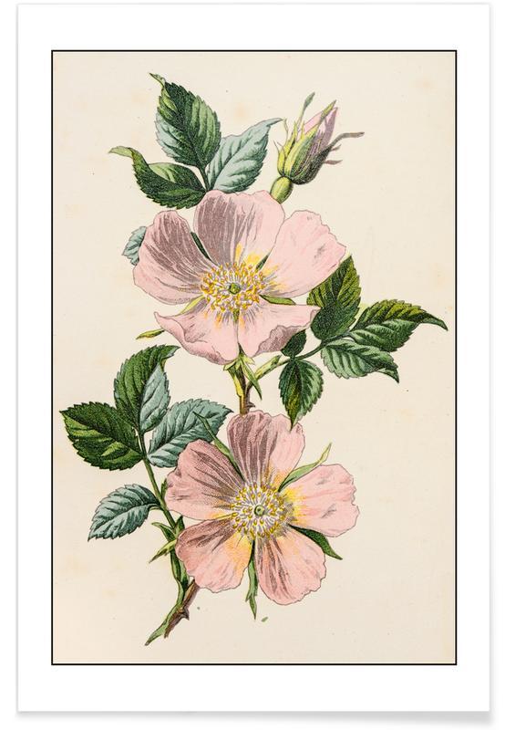 Roser, Pastelroser Plakat