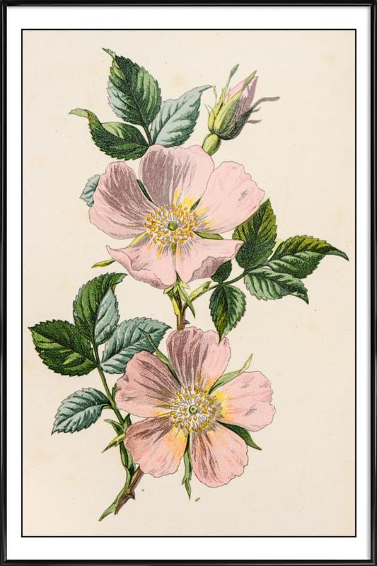 Pastel Roses Poster i standardram