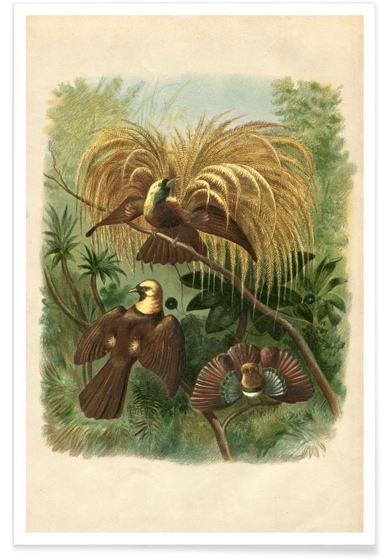 , Birds of Paradise Plakat