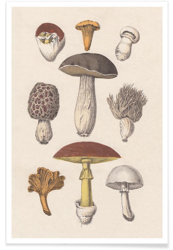 , Fungi póster