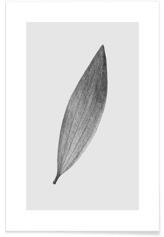 Bianco & nero, Eucalyptus Leaf poster