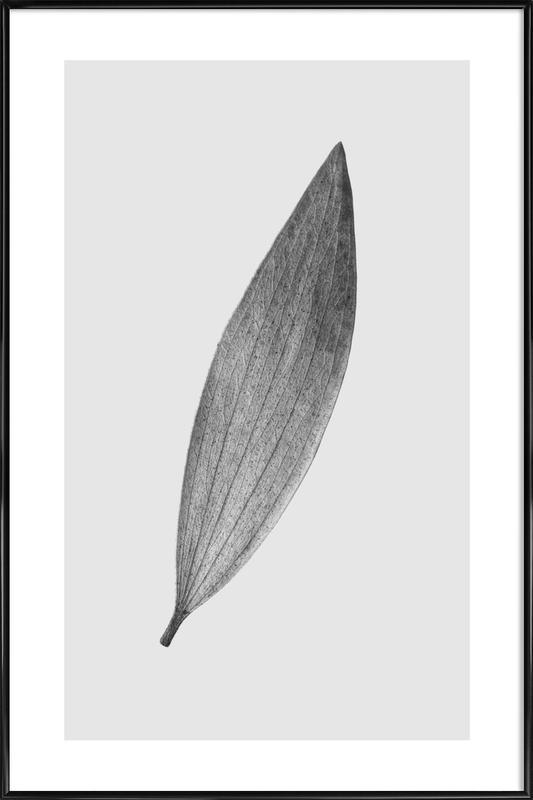 Eucalyptus Leaf Poster i standardram