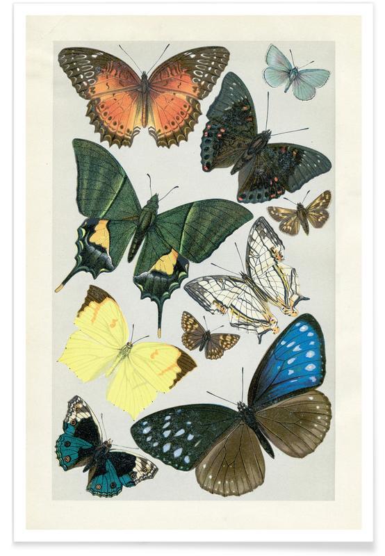 Butterflies affiche