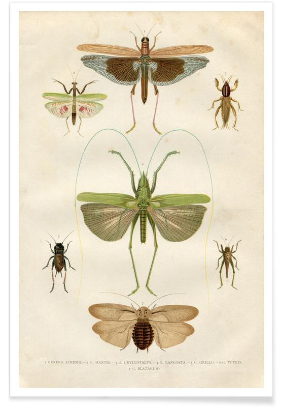 , Insects poster
