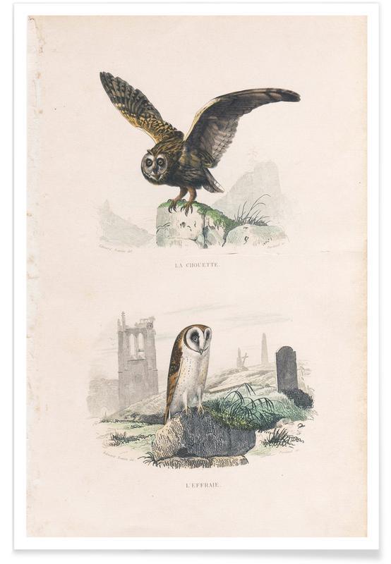 Ugler, Owls Plakat