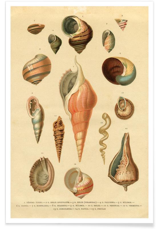 , Mollusc Shells póster