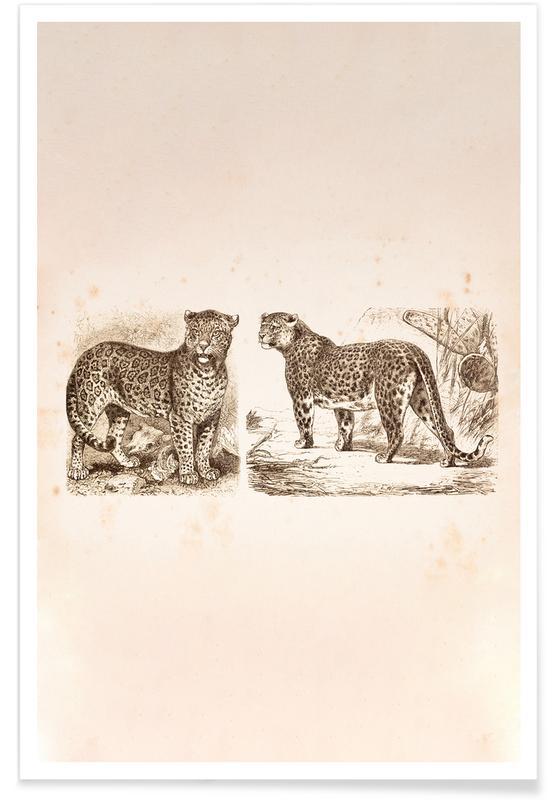 Jaguars, Jaguars affiche
