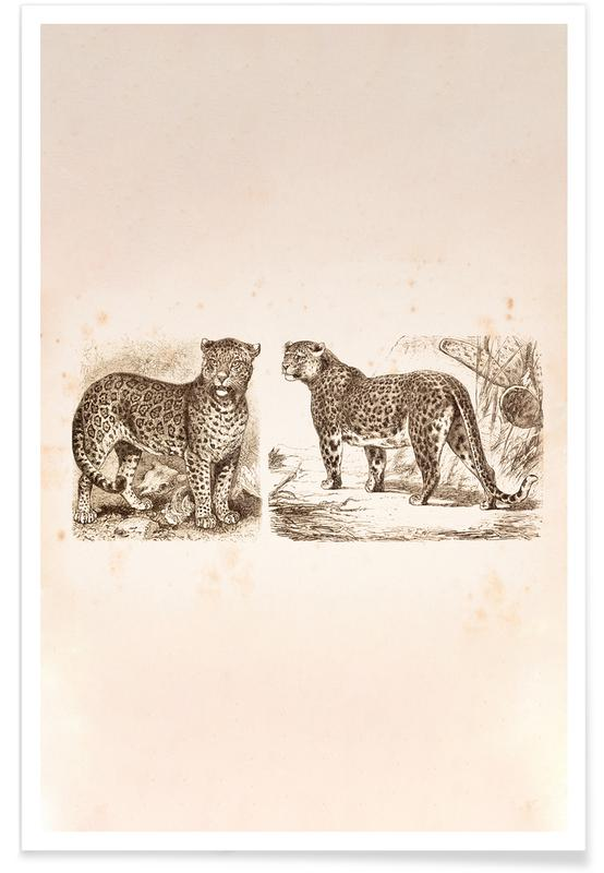 Jaguars, Jaguars Poster