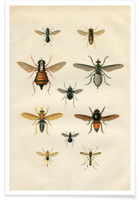 , Insects II Plakat