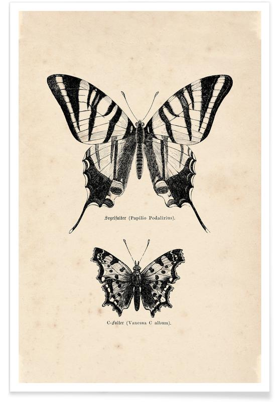 , Butterfly Engraving Plakat