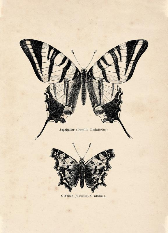 Butterfly Engraving Canvastavla