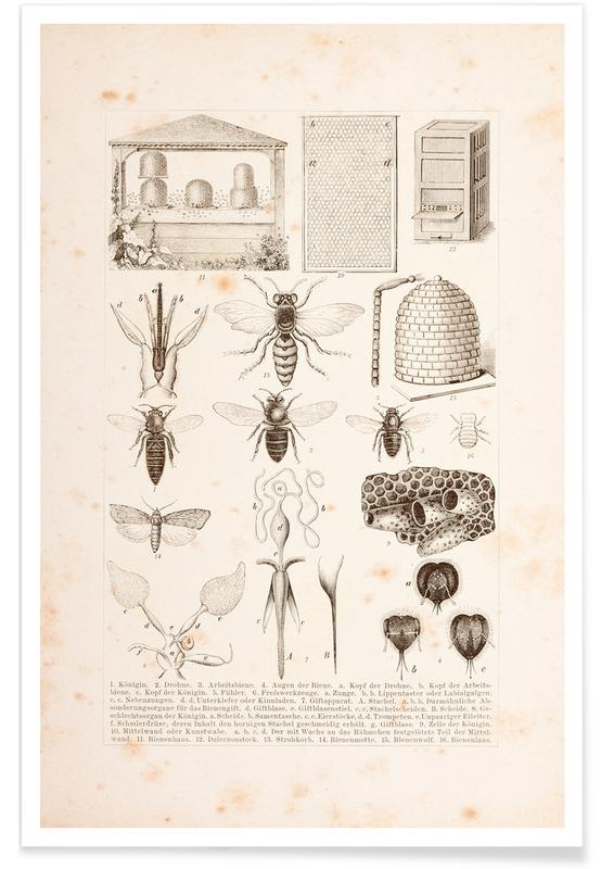 , Bees and Honey Plakat
