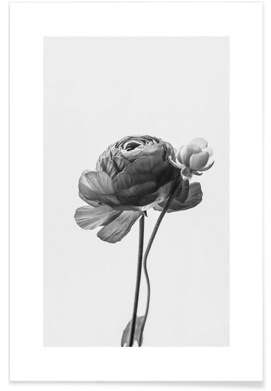 , Flower in Grey Plakat