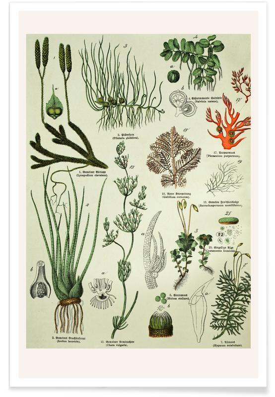 Hojas y plantas, Auf Dem Grünen Zweig póster