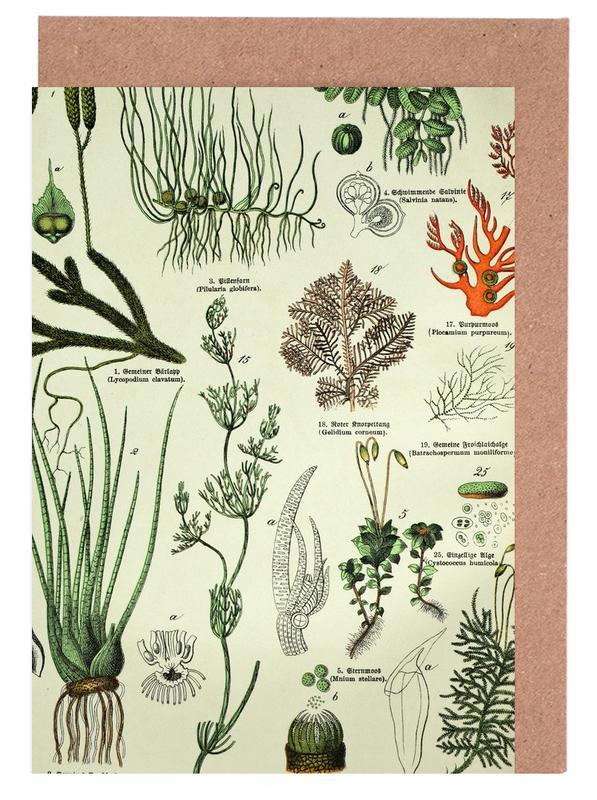 Blätter & Pflanzen, Auf Dem Grünen Zweig -Grußkarten-Set